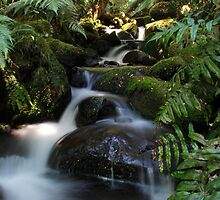 Cement Creek 2 by KeepsakesPhotography Michael Rowley