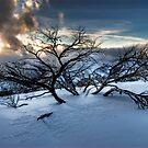 Hotham Snowfields by Robert Mullner