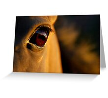the golden light of the setting sun Greeting Card