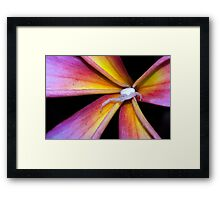 Crab Spider on Frangipani (2) Framed Print
