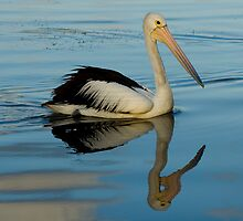 Mirrored Pelican by Mark Snelson