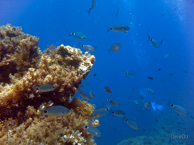 Underwater Landscape by DiveDJ