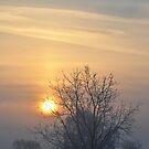 Winter morn. by Heather Thorsen