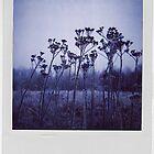 Polaroid IIII by Emily Denise