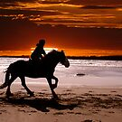 GALLOPING ALONG THE BEACH IN SUNSET by kfbphoto
