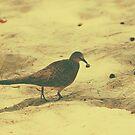 Spotted Dove v.2 by tropicalsamuelv