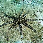 Giant Starfish by DiveDJ