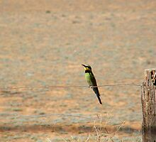 rainbow bee eater by binjy
