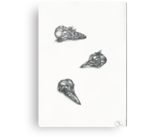 Bird skulls Canvas Print