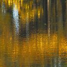 Golden Reflections by Janice Carter