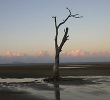 Shoal Point lone tree by GregBarr