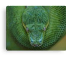 Peace - Green Tree Python Canvas Print
