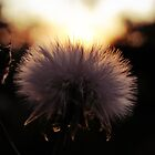 Weeds in my garden.. by webgrrl