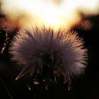 Weeds in my garden.. by webgrrl