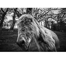 Snotty Donkey - Atishoo! Photographic Print