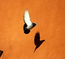 Casting Shadows in Flight by Kasia Nowak