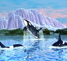 Killer Whales by Walter Colvin