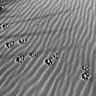 Foot Prints in the Sand by EvaMcDermott