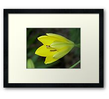 Yellow Display Framed Print