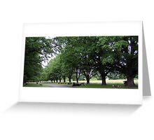 Bovine Avenue - Gostwyck, Northern Tablelands, NSW, Australia Greeting Card