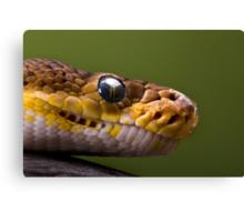 Timor Python Canvas Print
