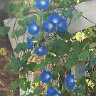 Blue by randi1972
