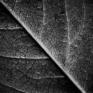Be Leaf by Matt Hurrell