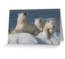 Bears On Ice Greeting Card