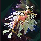 Leafy Sea Dragon by Ginny Schmidt