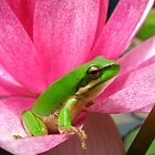 frog on lilly by Belinda Cottee