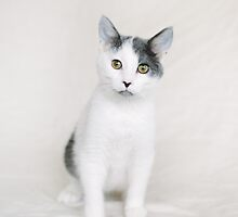 Curious Bumble by Another Chance Animal Welfare League