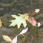 Leaves by RipleyDigital