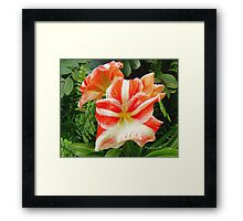 CANDY STRIPE Framed Print
