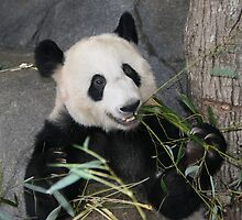 The Happy Panda by Lisa G. Putman