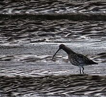Curlew by Mortimer123