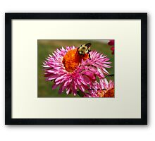 STRAWFLOWER DINER Framed Print
