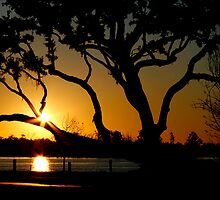 Back Bay Live Oak Sunset  by Jonicool