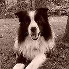 shamus frisbee dog by Marie Tixier-Brennan