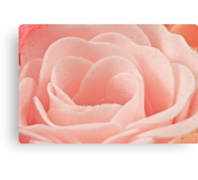 Bath Time Rose Soap Macro Canvas Print