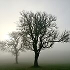 Trees in Fog by niklens