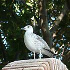 Sea-Gull by DavidGlez