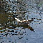 Sea-Gull in the water by DavidGlez