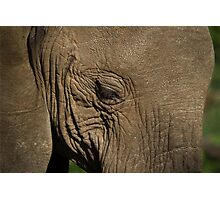 A majestic elephant Photographic Print