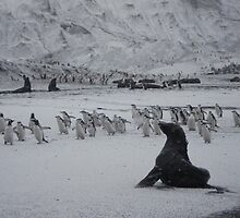 March of the Pengins by Zac Gillett