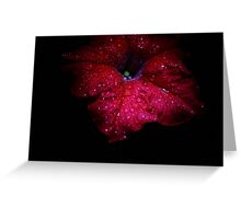 Blooms from the Dark of Night - 7 Greeting Card