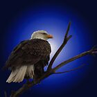 The Eagle by Gene Praag