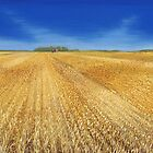 Cut Wheat by GeorgeBurr