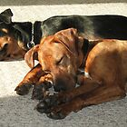 Rescue Dogs Sharing a Beam by HolleyWaterman