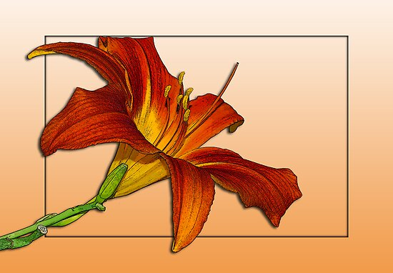 Daylily Revisited by Bonnie T.  Barry