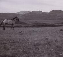 Blackfoot Montana by dimitrijansen